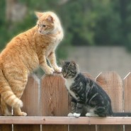 Interpreting Feline Aggression